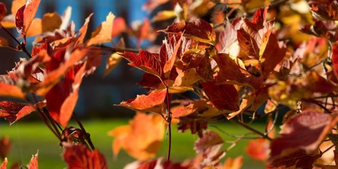 Zelta rudens pienāk arī Aizkrauklē